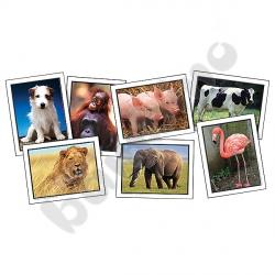 Ulubione zwierzęta